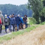 Balade canine Animal Behaviour Julie Willems