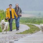 deux berger blanc suisses et un bichon en promenade