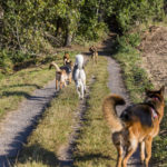 Balade canine Animal Behavior