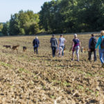Balade canine dans les champs
