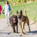 Deux chiens en interaction balade canine