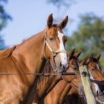 Quatre chevaux