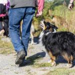 Balade canine Animal Behaviour Center