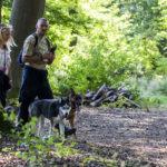 Balade canine de Julie Willems animal behaviour