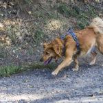 Petit chien en balade canine