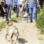Photographe en balade canine
