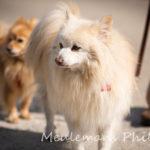 Deux chiens et leur maître