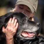 Moment de complicité entre un chien et sa maîtresse