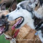 Deux chiens en interaction
