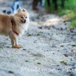 Petit chien dans un chemin de sable