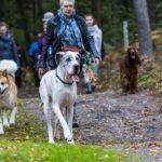 Balade canine de Julie Willems