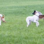 Quatres chiens sont en interaction