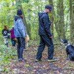 balade canine dans la forêt