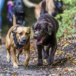 2 chiens en balade dans les bois