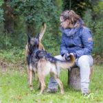 Interaction entre 2 chiens en balade dans les bois