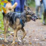Balade canine Julie Willems dans les bois