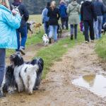 Promenade canine dans les champs
