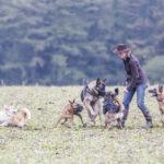 Interaction entre plusieurs chiens