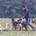 Intervention dans une interaction entre plusieurs chiens