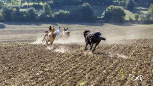 Les chiens courent dans un champ