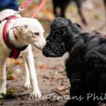 Interaction entre deux chiens lors de la balade canine